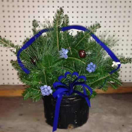 Blueberry Arrangement